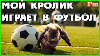 Уход за кроликом. Кролик играет в футбол. ПОКУПАЕМ НОВУЮ КЛЕТКУ для КРОЛИКА.