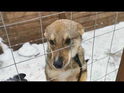 Жизнь бездомного щенка в приюте История спасения Лучика Он ищет своего человека Помогите Новосибирск