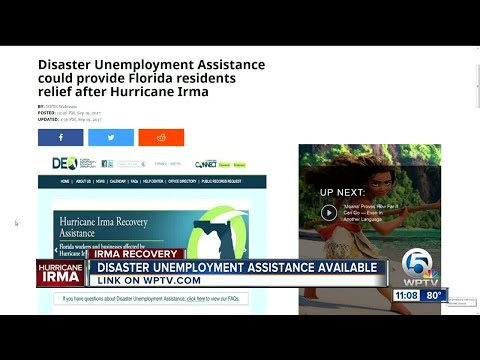 Disaster Unemployment Assistance could provide Florida residents relief after Irma