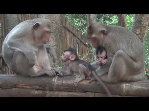 Good morning monkey,they are happy together
