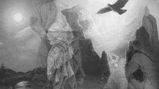 Böser Wolf - Die Toten Hosen