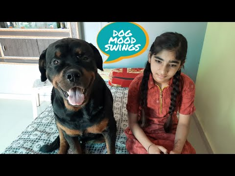 rottweiler mood swings|| well trained rottweiler||best guard dog|