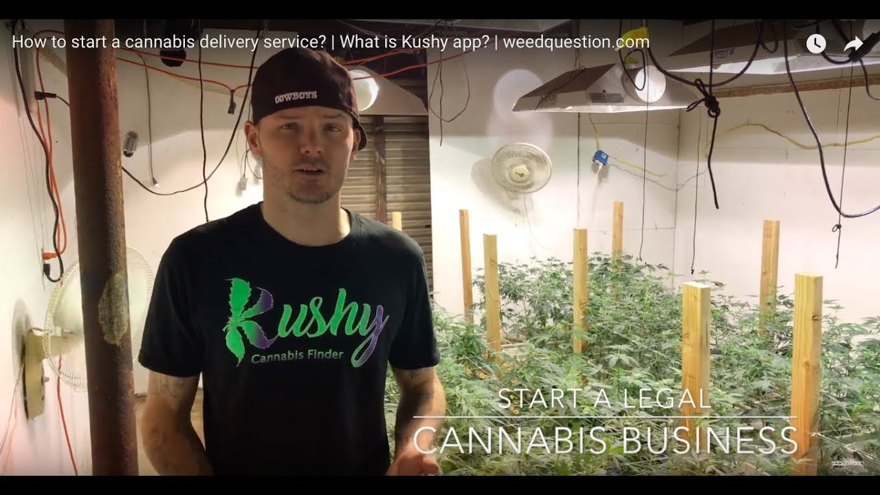 How to start a cannabis delivery service? | What is Kushy app? | weedquestion.com