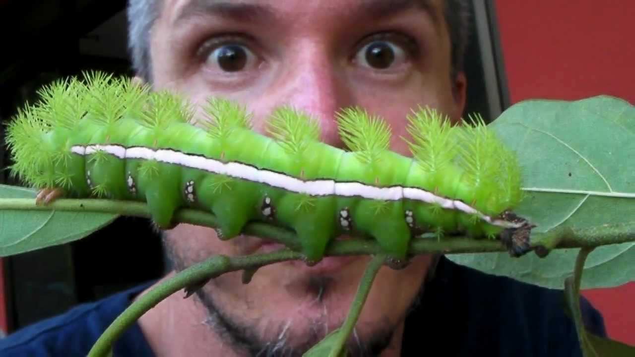 how to get rid of small green caterpillars