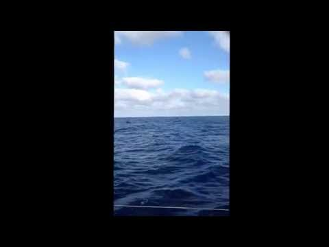 Sailing offshore between New Zealand and Fiji - downwind with the spinnaker up
