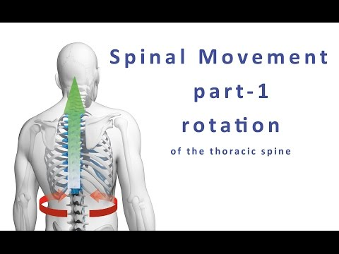 Moving your spine - how to mobilize the thoracic spine and chest area using rotation