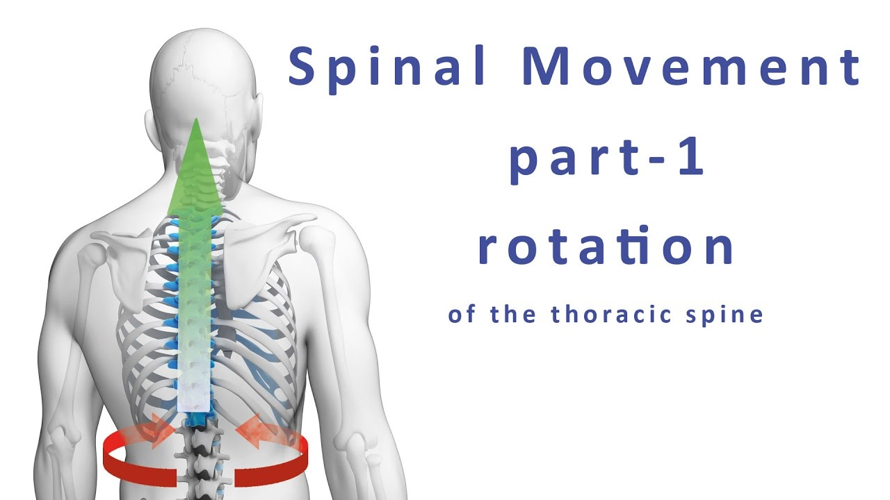 Moving Your Spine How To Mobilize The Thoracic Spine And Chest