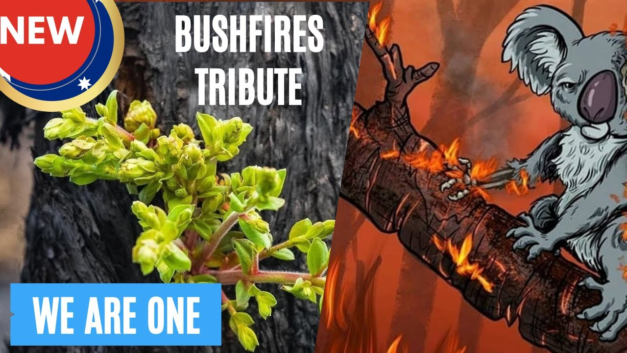 AUSTRALIAN BUHSFIRES TRIBUTE WE ARE ONE