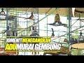 Bahan Gosip Duel Borneo Murai Batu Gembung Jadi Tontonan Di Mahakarya Borobudur  Mp3 - Mp4 Download