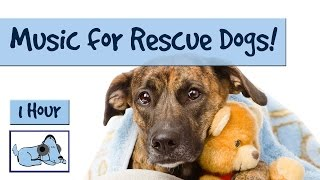 Music specifically composed for rescue dogs who may have higher anx...