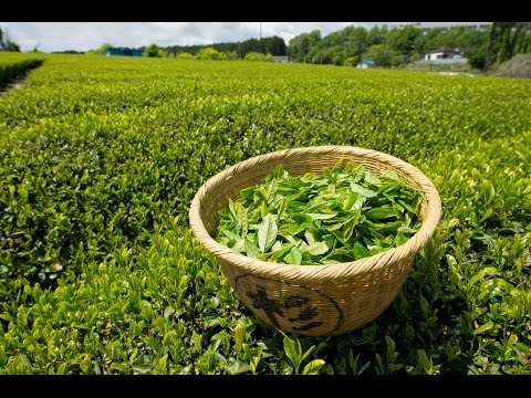 A Mystery Drink - The History Of Tea - History TV