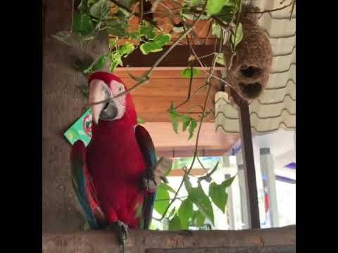 FUNNY BIRD MACCAW