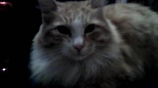 Кот как кот а этот в шляпе