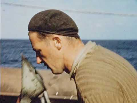 Whales And Whalermen (1957)