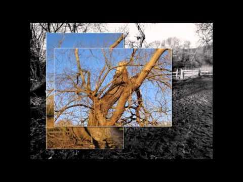 After The Storm - Billingham Beck Valley