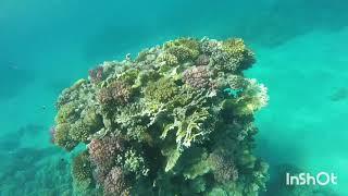 Шарм эль Шейх 2020 октябрь Шератон Новотель Подводный мир Наама бей