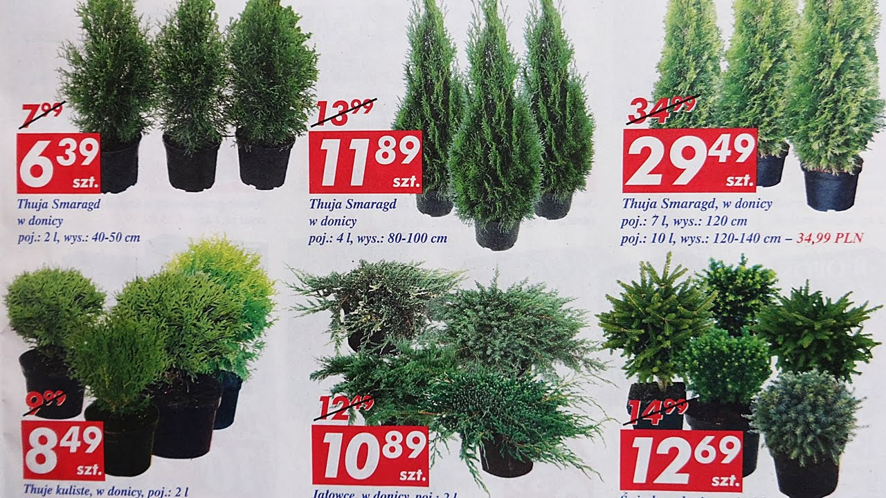 Nowa Gazetka Auchan Od 14032016 Ogród I Rekreacja