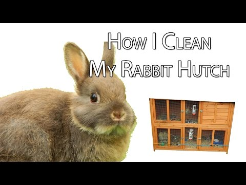 How I Clean My Rabbit Hutch