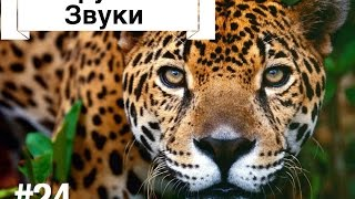 "Фактор WoW №24 ""Вирусные Звуки"" [Viral Sounds]"