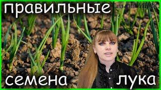 А ты знал(а)? Как ПРАВИЛЬНО выбрать семена ЛУКА!!!