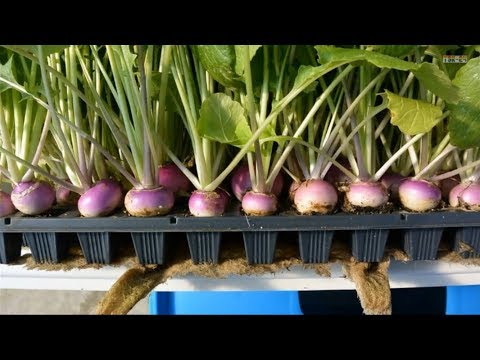 Hydroponics - at Home and for Beginners