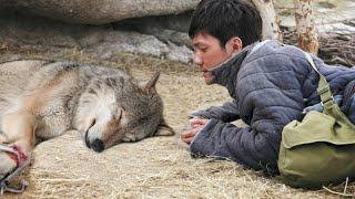 Этот парень спас волчицу, а спустя один год она спасла ему жизнь…