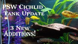 Psw Cichlid Fish Tank Update Ep #4 - 3 New Cichlid's From Local Fish Club! (hd)