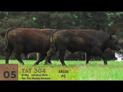 LOTE 05 - TAT 301 E TAT 304