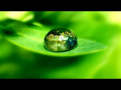 🌳 Green -  the color of life, renewal, nature, and energy! ... (music  by Tim Janis) 🌿