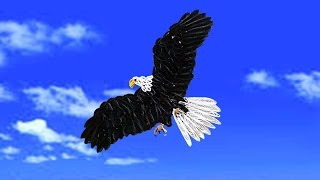 quilling artwork |  How to make a beautiful eagle flying in the sky