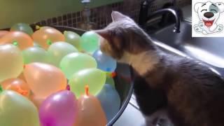 Смешное видео ) ох уж эти коты ) Смешная подборка )
