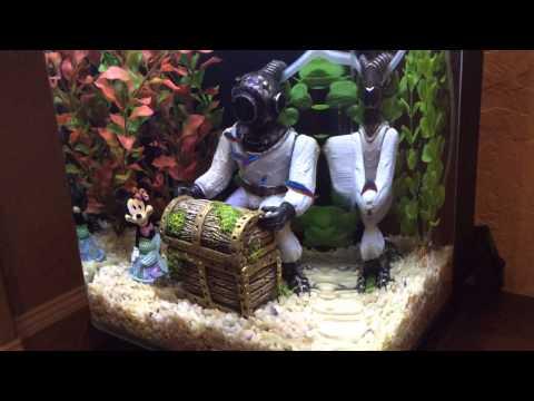 Marineland Contour 5 gallon aquarium - YouTube