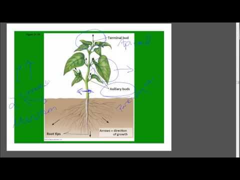 Plants_Growth