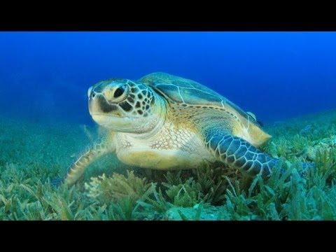Barbados SCUBA Diving - Sharks, Wrecks, Seahorse & More