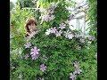 Не рвите цветы не рвите песня Юрия Антонова Мой садик Ирина Моругий mp3