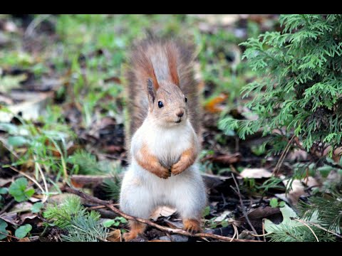 Cutest Baby Squirrels Eating Nuts - Animal Compilations