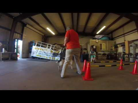"Prodogz Dog Training AKC Obedience: Teaching  ""Stand"""