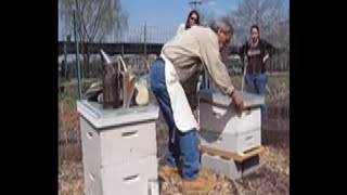 Bee Class at East New York Farms