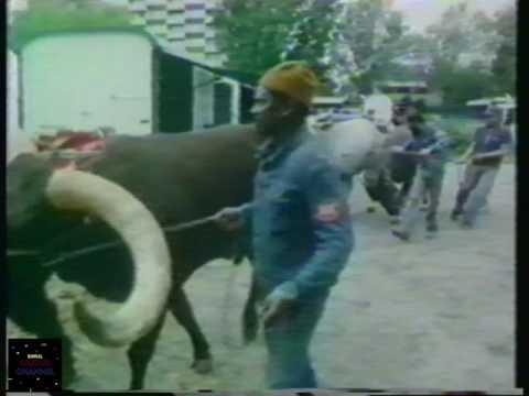 Circus KNIE, 1979  TV docu 1