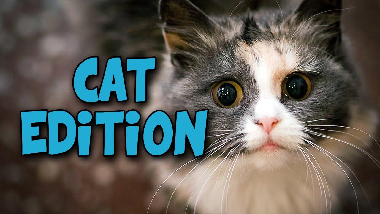 「trouble cat」の画像検索結果