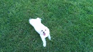 Melo running in the backyard. Thumbnail