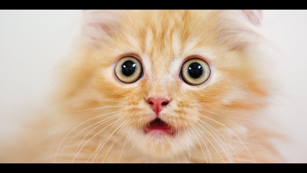 Play Cat Scratch Fever