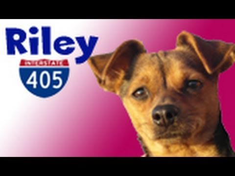 Dog rescue: Riley