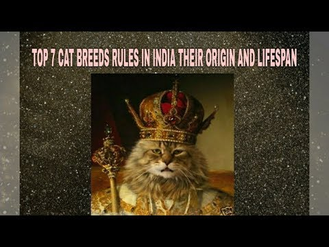 TOP 7 CAT BREEDS RULES IN INDIA THEIR ORIGIN AND LIFE SPAN