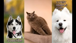 CUTEST ANIMALS IN THE WORLD #18 - Funny cats compilation 2019
