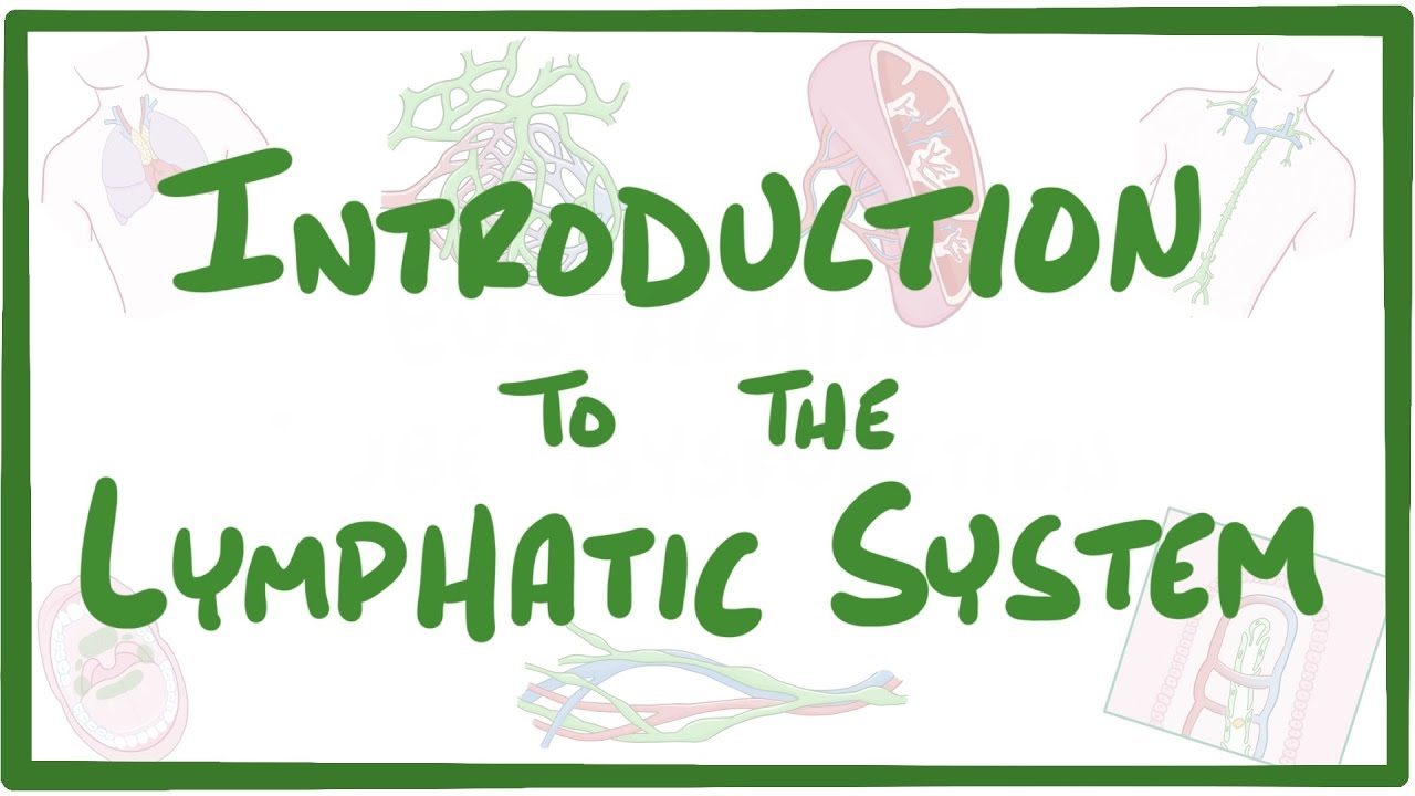Introduction to the Lymphatic System - YouTube