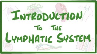 Introduction to the Lymphatic System