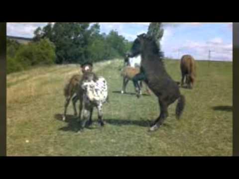 Süße Pferde Bilder