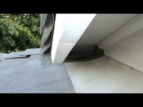 Rodent Removal Images - Got Rats Rodent Proofing