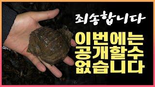 춘장대해수욕장 참소라 해루질과 나드리캠핑장 소개 [충남…